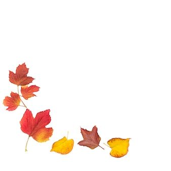 Composition of autumn leaves on a white background