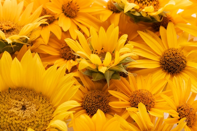 Composition of beautiful flowers background