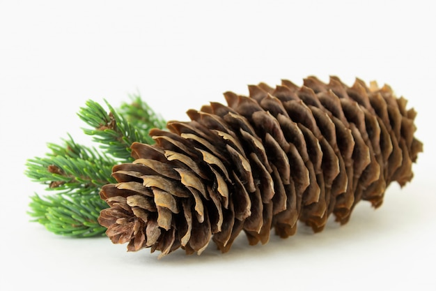 Composition of big pine cone with pine twig isolated on white background.