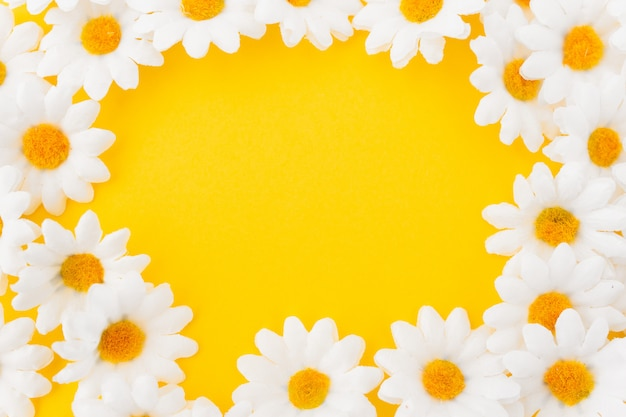 Composition in circle of daisies on yellow background