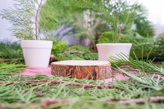 The composition displays the product. round old wood with spruce leaf decoration. summer product display ideas