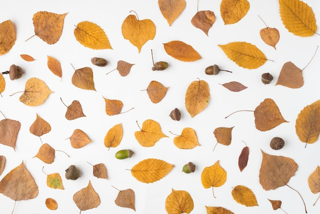 Composition of dried leaves and acorns