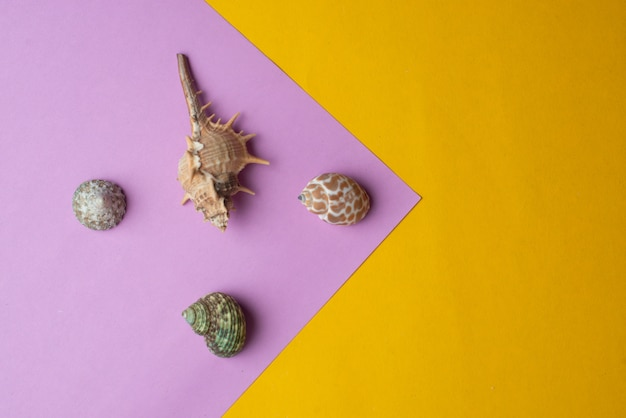 Composition of exotic sea shells. summer concept. top view