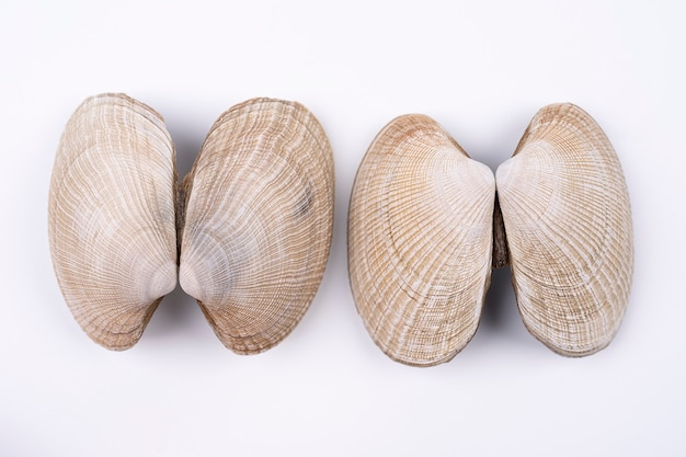 Composition of exotic sea shells and on a white background top view sea shells on white background