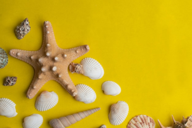 Composition of exotic sea shells on yellow background with copyspace. summer concept. top view