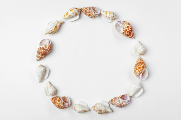 Composition of exotic seashells frame background