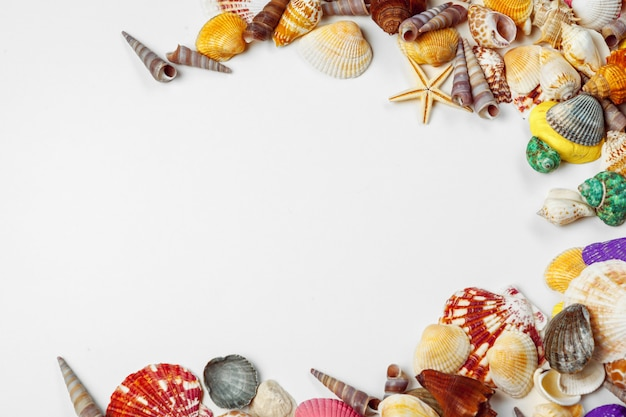Composition of exotic seashells