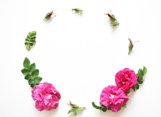 Composition of flowers. frame of pink flowers on a white background. flat lay, top view, copy space.
