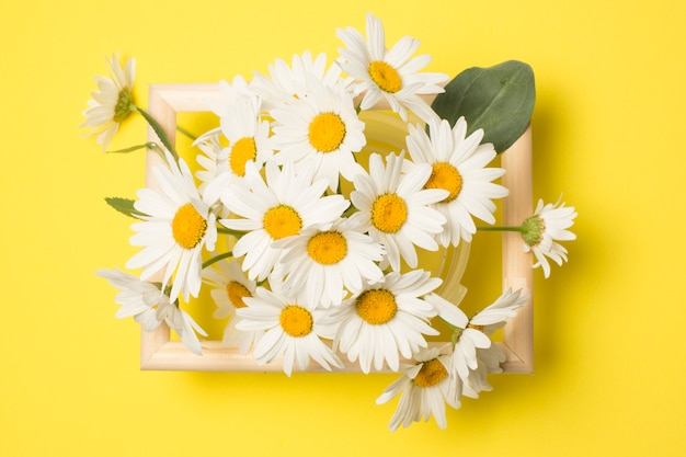 Composition of fresh beautiful daisy flowers between frame