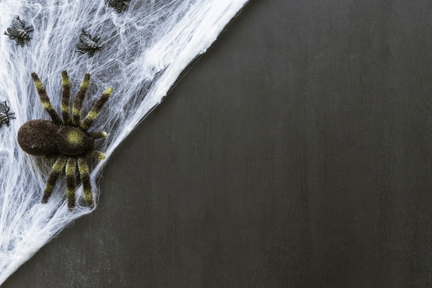 Composition for halloween with spider on cobweb