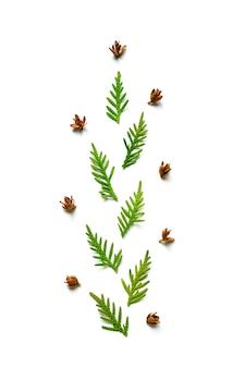 Thujaと白い背景で隔離の小さなコーンの小枝の組成物。