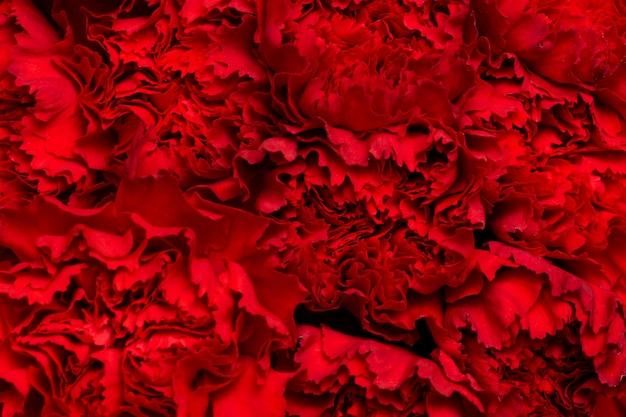 美しい花の背景の構成