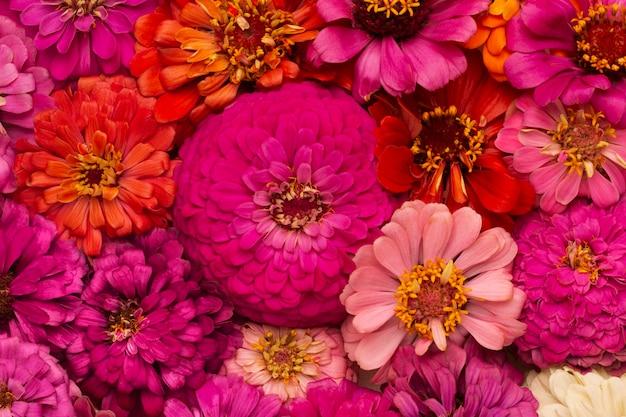 Композиция из красивых цветов обоев