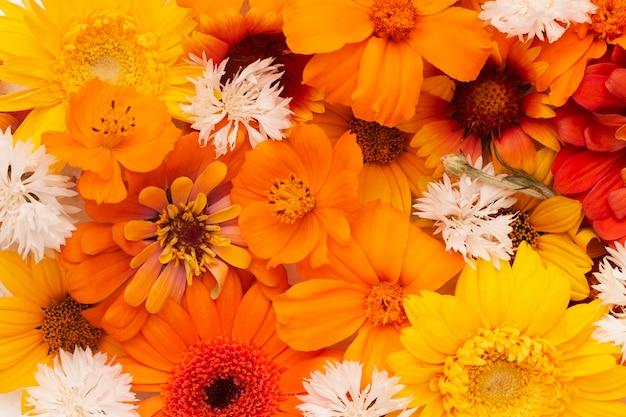 美しい花の壁紙の構成
