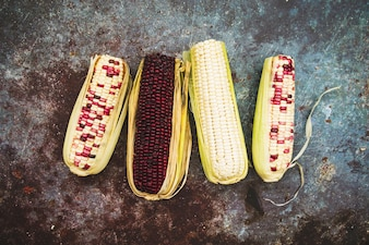 Composition of colored corn on cob