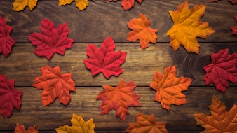 Composition of colourful maple leaves