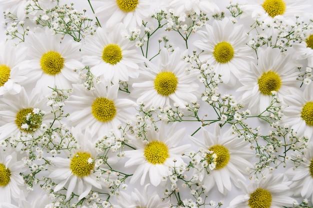 Состав ромашек и цветов Premium Фотографии