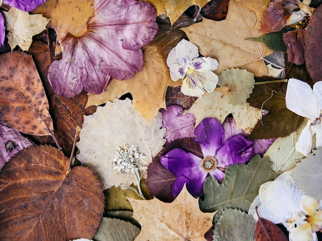 乾燥した秋の紅葉と花の組成。自然な背景。植物標本。