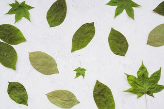 Composition of dried green leaves