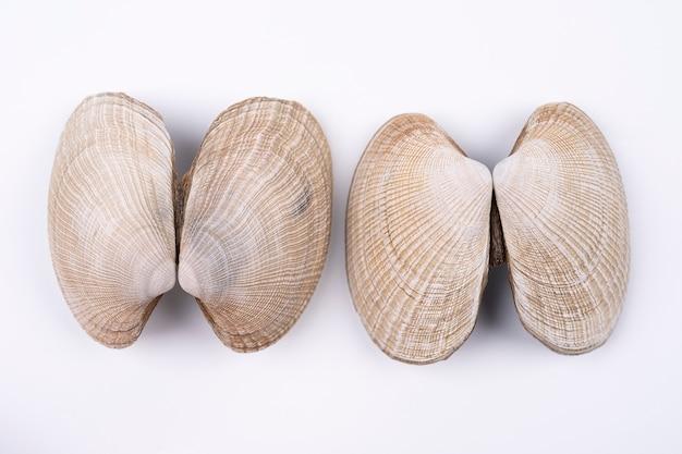 Композиция из экзотических морских раковин и на белом фоне вид сверху морских раковин на белом фоне