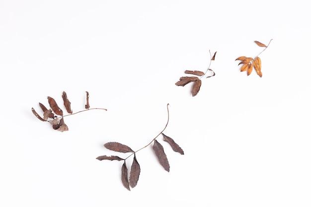 落ちてくる乾燥した紅葉と白い背景の果実の構成フラットレイ、上面図、コピースペース