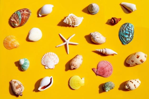 黄色の表面にヒトデとエキゾチックな海の貝の組成。