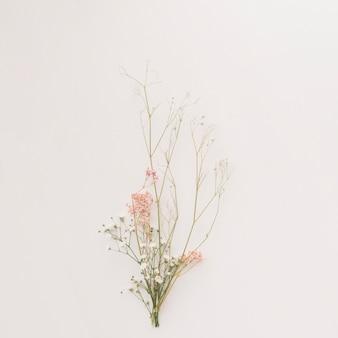 얇은 식물 가지의 구성