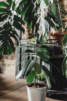 Композиция из тропических листьев