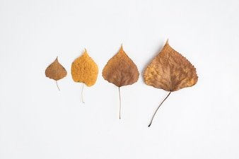Composition of withered leaves in row
