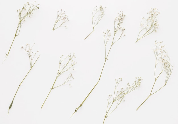 Composition of plant twigs with little flowers