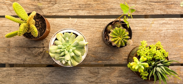 Composition of pots with plants on wooden background