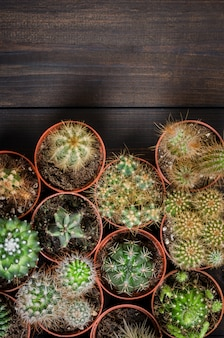 Composition of several mini cacti, flat lay, top view.