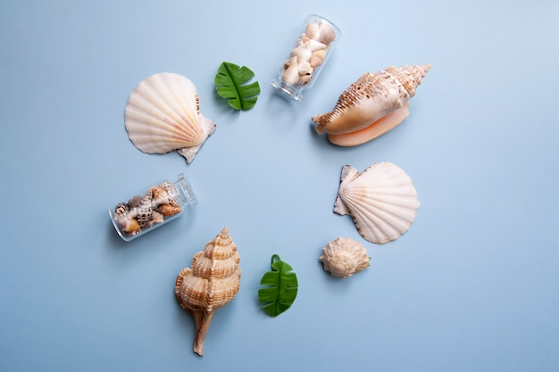 Composition of shells on a blue background. summer frame. copy space.