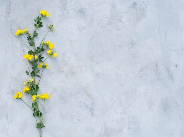 Composition of summer flowers on a gray background.