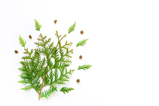 Composition of twigs of thuja and tiny cones isolated on a white background.