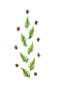 Composition of a twigs of thuja and tiny cones isolated on a white background.