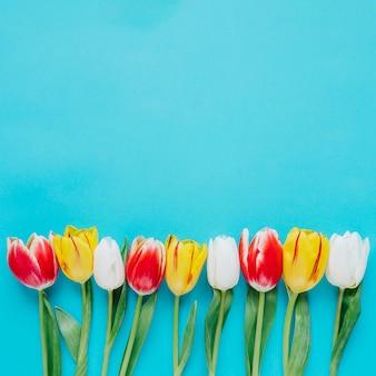 Composizione di tulipani vivaci sul blu