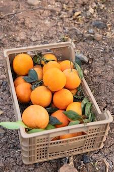 Composizione con scatola piena di arance