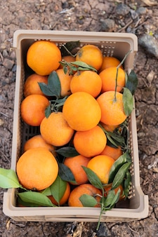 Composition with box full of oranges
