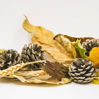 Composition with cones and dried leaves