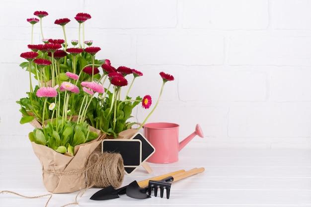 植栽と園芸ツールのための最初のデイジーの花の組成