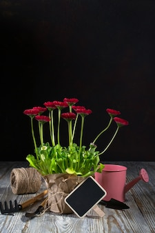 Composition with first daisy flowers  for planting and gardening tools