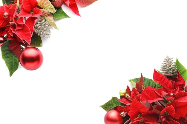 白い背景の上のクリスマス植物ポインセチアの花との構成