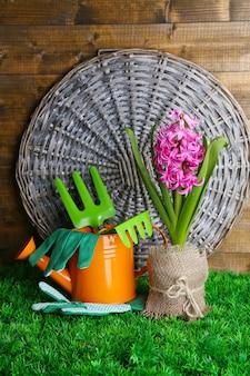 Композиция с садовым инвентарем и красивым розовым цветком гиацинта в горшке, на зеленой траве на деревянном столе