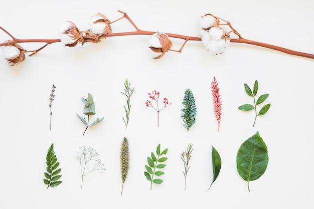 Composizione con foglie e rami