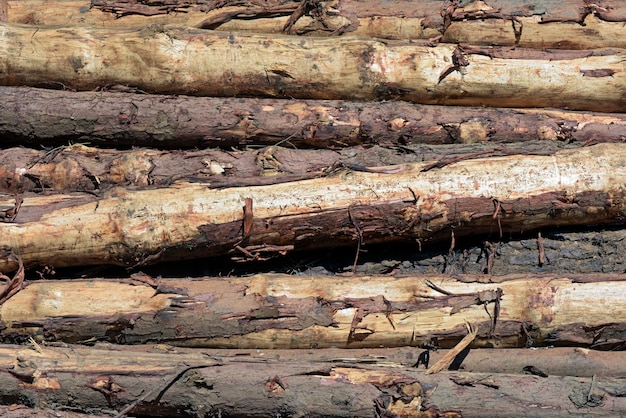 Composition with pile of wooden trunks in closeup background
