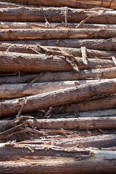 Composition with pile of wooden trunks in closeup