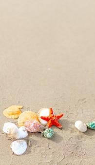 모래에 조개와 불가사리가 있는 구성. 여행 및 휴가의 개념입니다. 복사 공간, 세로