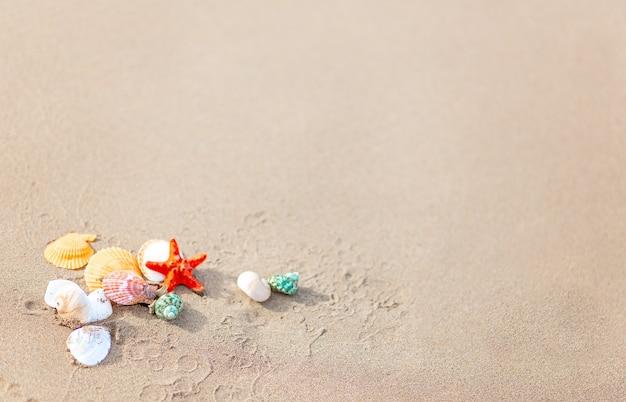 모래에 조개와 불가사리가 있는 구성. 여행 및 휴가의 개념입니다. 복사 공간