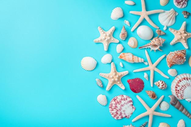 Композиция с ракушками, большим разнообразием ракушек и морских звезд на голубой стене. вид сверху с копией пространства.